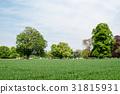 wheat, field, wheatfield 31815931