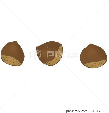 Chestnut <Fruit of loose fruits> 31817792