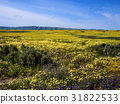 Flower field blooming in National park nature 31822533