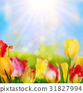 Colorful spring flowers tulips. EPS 10 31827994
