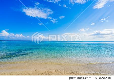 【오키나와】 여름 이미지 31828246