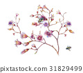 watercolor painting of leaves and flower, on white 31829499