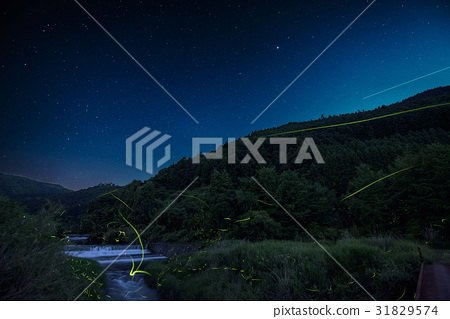 firefly, lightning bug, fireflies 31829574