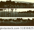 Horizontal banners of coniferous pinewood. 31836825