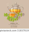 oregano, vector, tea 31837619