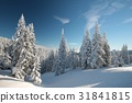 Spruce trees covered with snow on a mountain slope 31841815
