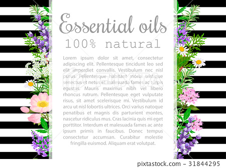 Popular essential oil plants label set. badge 31844295