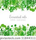 Popular essential oil plants label set in green 31844311