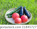 summer, vegetables, tomato 31845727