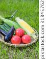 여름 야채 토마토 오이 이루는 옥수수 잔디 백 31845762