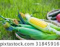 옥수수, 싱싱, 프레쉬 31845916