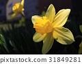 spring, 배경, 이른 31849281