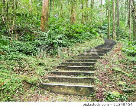 森林公園 31849454
