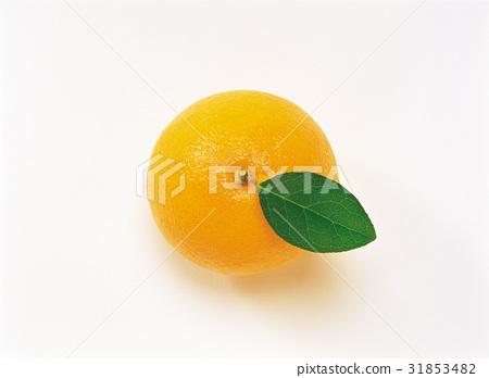 오렌지 31853482