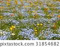poppy, bloom, blossom 31854682