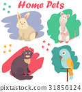 Bright images of domestic animals cat, parrot, rat 31856124