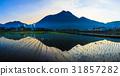 전원 풍경, 전원 경치, 논 31857282
