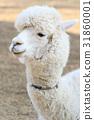 อัลพาก้า,สัตว์,ภาพวาดมือ 31860001