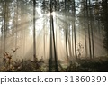 Coniferous forest at sunrise  31860399
