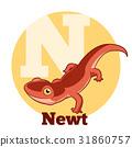 newt, vector, alphabet 31860757