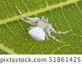 蜘蛛 蟲子 漏洞 31861425