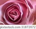 Romantic floral background. Flower. Rose closeup 31872672