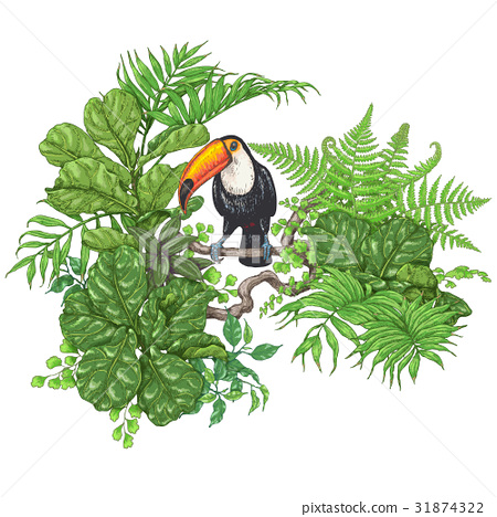 Tropical Plants  and  Sitting Toucan 31874322