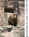 zoo, hamamatsu, city 31874919