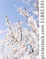 ลูกท้อ,บ๊วย,ดอกไม้ 31885391