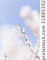 ลูกท้อ,บ๊วย,ดอกไม้ 31885392