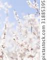 ดอกพลัม (พลัมสีขาว) 31885395