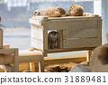 สวนสัตว์,สัตว์,ภาพวาดมือ 31889481