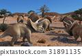 Triceratops 3D rendering 31891135
