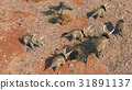 dinosuar 3D Rendering 31891137