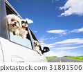 dog family traveling  road trip 31891506