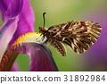 Nice Butterfly Southern Festoon 31892984