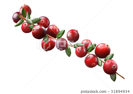 Cranberry branch composition, clipping paths 31894934