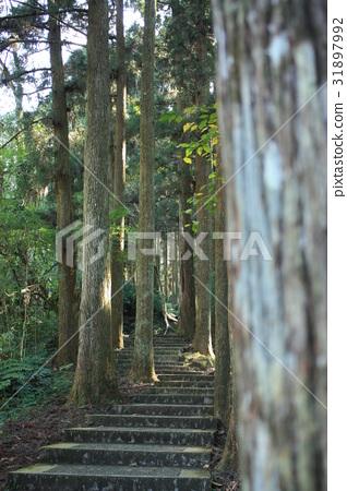林中步道 31897992
