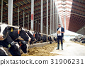 farmer with clipboard and cows in cowshed on farm 31906231