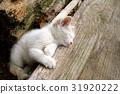 잠 흰 고양이 폐재를 베개 옆에서 31920222