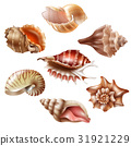 set, seashell, sea 31921229