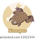 青蛙 动物 字母 31922344