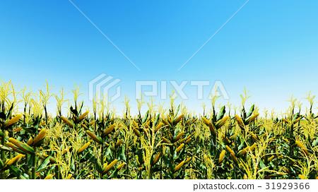 Corn field with blue sky 3D render 31929366