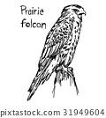Prairie falcon - vector illustration sketch 31949604
