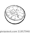 石灰 酸橙 萊姆 31957946