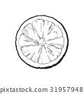 石灰 酸橙 萊姆 31957948