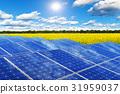 Solar panels in rape field 31959037