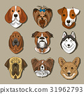Vector illustration of different dogs breed 31962793