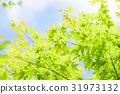 tender, green, verdure 31973132