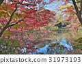 ฤดูใบไม้ร่วง,ต้นเมเปิล,ผิวน้ำ 31973193